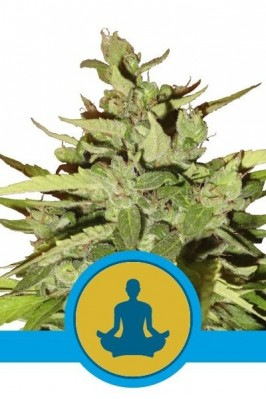 Auto Stress Killer CBD